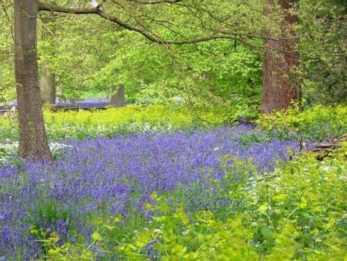 Kew gardens wiosną
